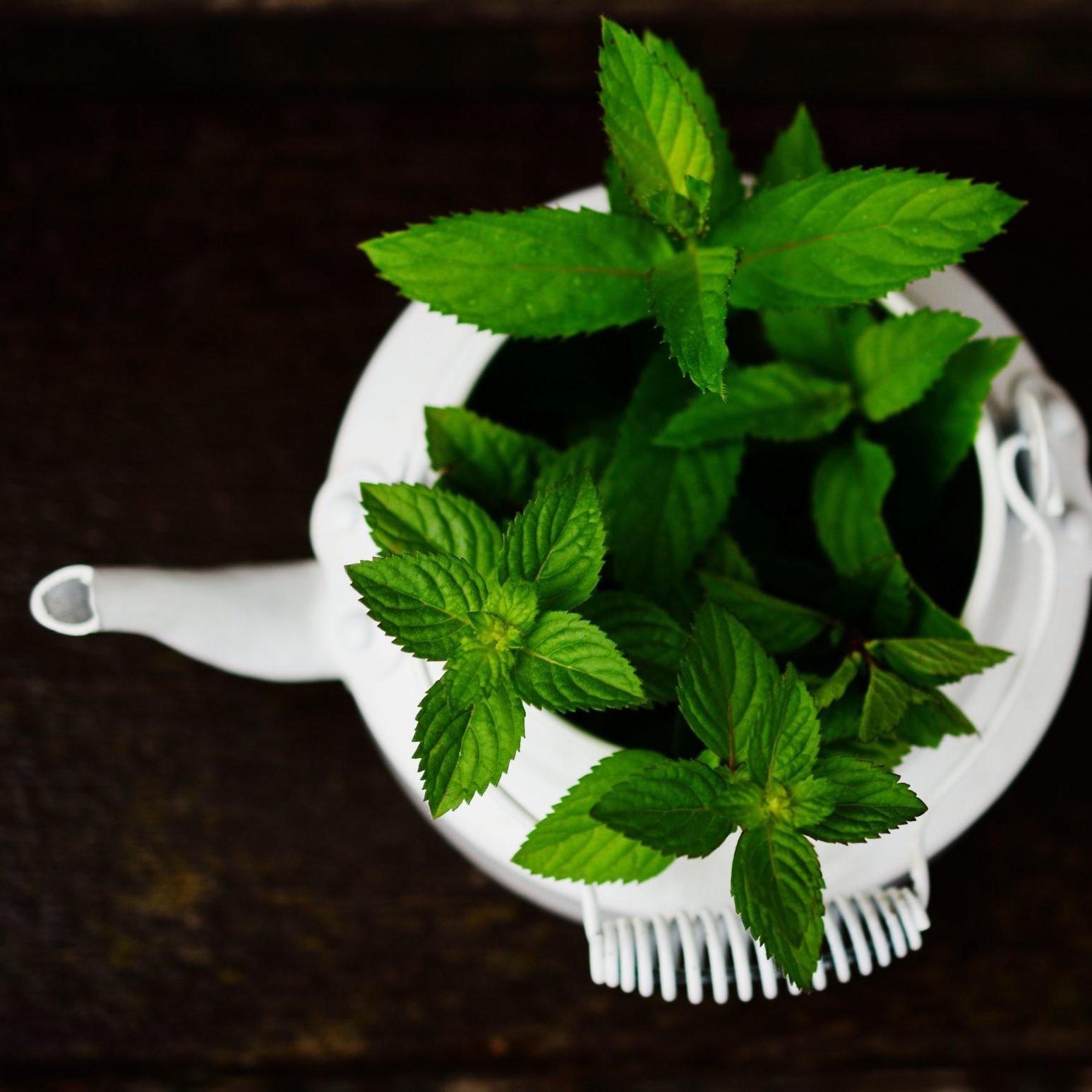 peppermint-teapot-2048x1547-1.jpg